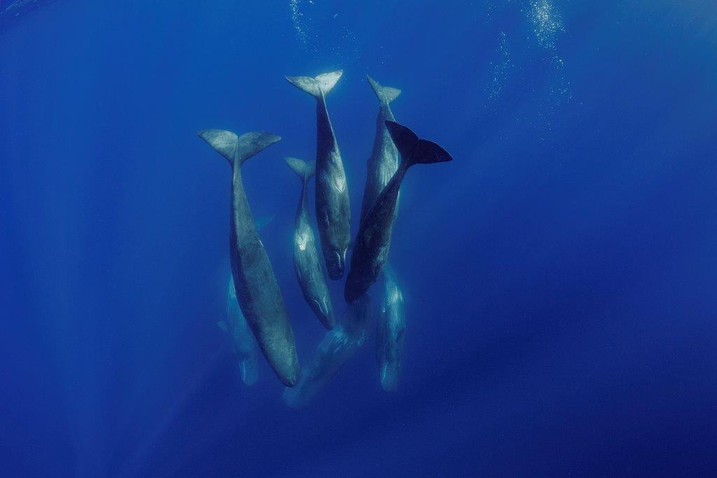 Les secrets des baleines épisode 2