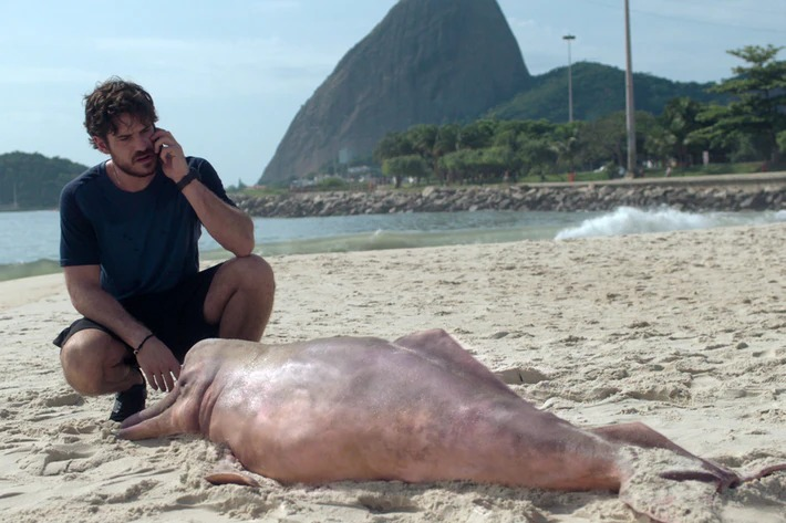 Eric s'occupe du dauphin échoué.