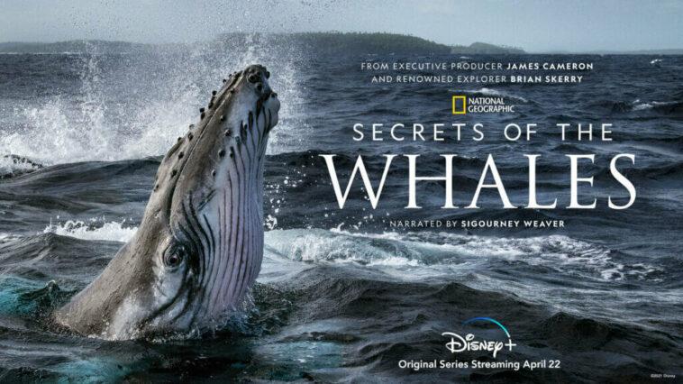 Le secret des baleines