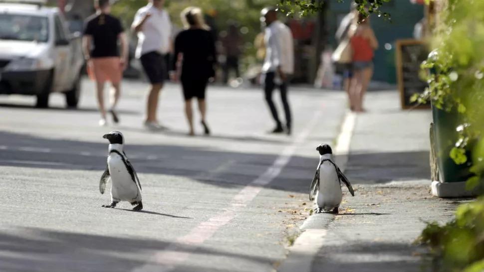 En route pour la ville des pingouins.