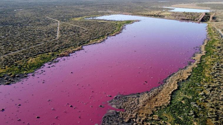 Le lagon rose argentin qui change de couleur pour des raisons inquiétantes